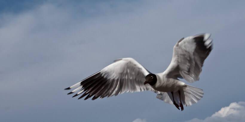 полет птиц, важность, физиология, механизм, профилактика болезней птиц