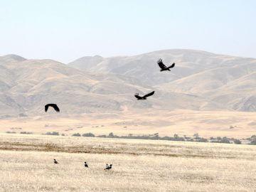 шлейки, путцы, костюмчики, поводки для птиц, попугаев, сов, врановых, жако, какаду, ара, карела,