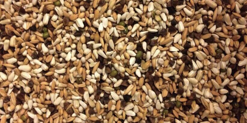 корм для птиц и попугаев, зерновая смесь, какая лучше, чем кормить