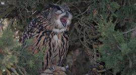 погадки хищных птиц, сов, врановых, насекомоядных, филин