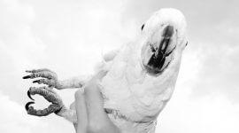 что делать если птица улетела из клетки на улицу, как поймать попугая на улице