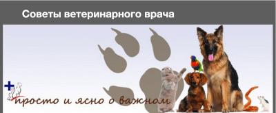 Советы ветеринарного врача о содержании домашних животных и профилактике болезней