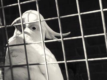 болезни и лечение птиц, ветеринарный врач, болезни попугаев