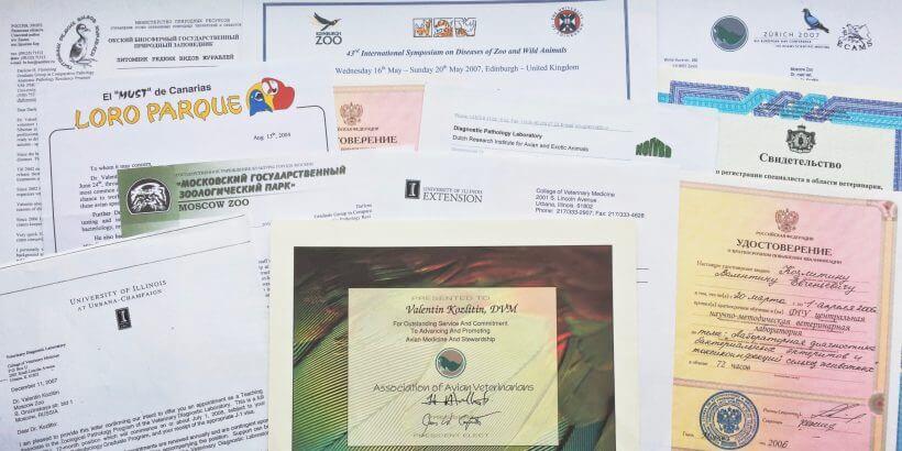 дипломы и сертификаты Валентин Козлитин