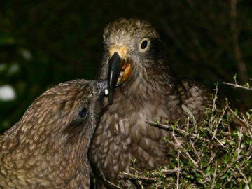 лечение птиц, консультации ветеринарного врача орнитолога, Валентин Козлитин
