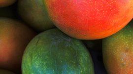 манго как корм для попугаев