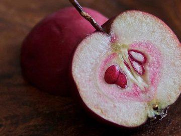 какие фруктовые косточки можно использовать как корм для попугаев