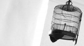 опасности для улетевшей птицы на улице, выживет ли попугай зимой на улице
