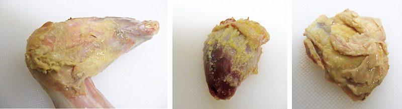 Сапсан (Falco peregrinus). Стафилококковый целлюлит, перикардит, гранулематозный аэросаккулит.