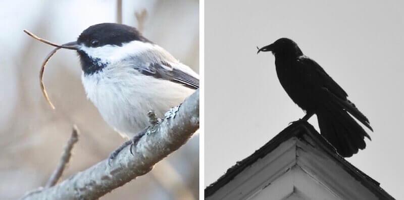 вирусные болезни диких птиц Аляски. Поецивирус.