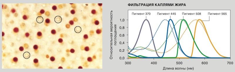 фильтрация жировыми каплями в пигментах птиц