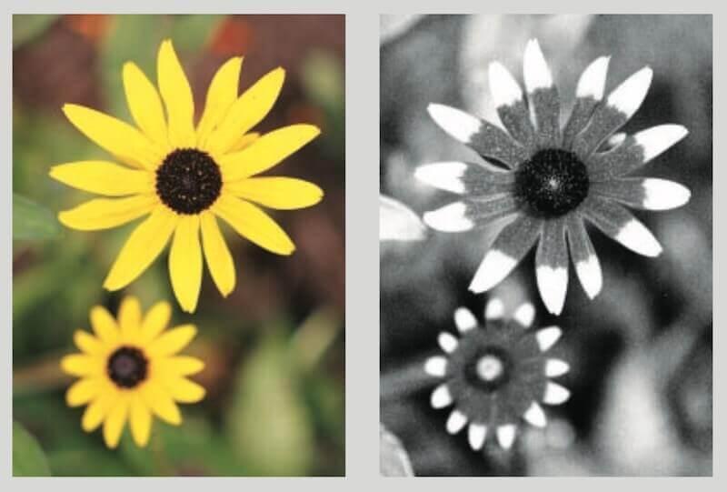 как выглядят цветы в ультрафиолете
