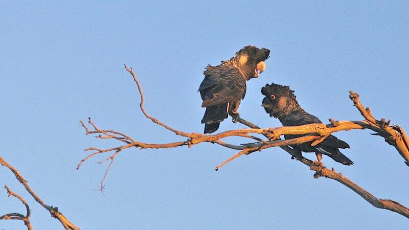Лечение попугаев и других птиц, физическая нагрузка для выздоровления.