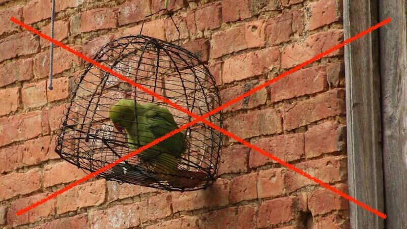 Плохое, ужасное содержание попугаев.