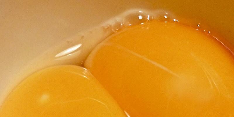 попугай снес яйцо