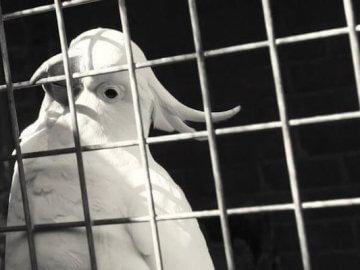 болезни попугаев, признаки, симтомы, лечение