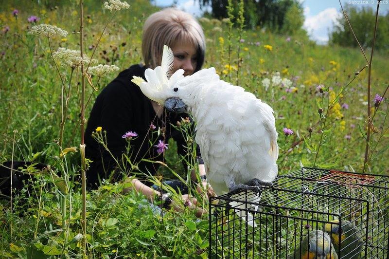 лечение попугаев какаду отзыв