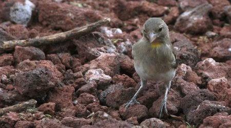 корм для насекомоядных птиц, живые, свежие насекомые