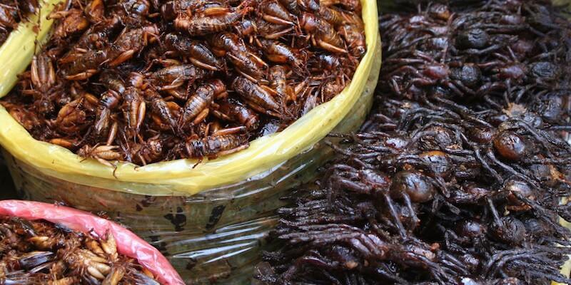 сухие насекомые для кормления певчих насекомоядных птиц