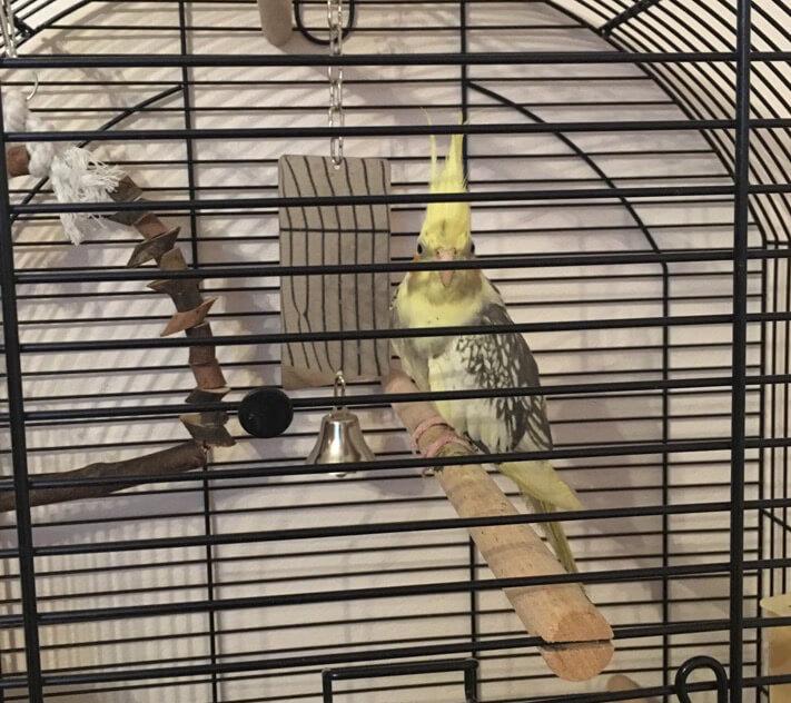 отзыв о лечении попугая кореллы, ветеринарный врач орнитолог Валентин Козлитин