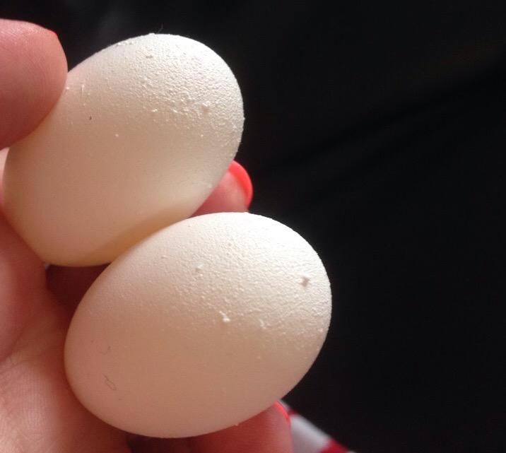 попугай какаду снесла яйца