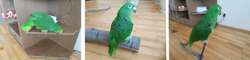 отзыв о лечении попугая Козлитин