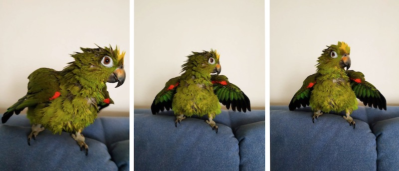 отзыв о лечении птиц онлайн Козлитин Валентин