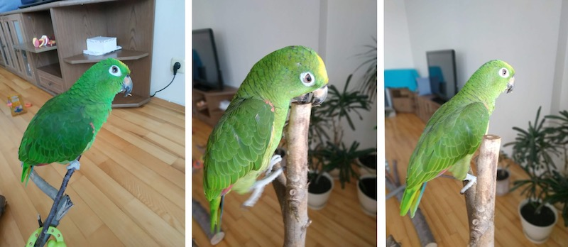отзыв о работе ветеринарного врача орнитолога Валентина Козлитина
