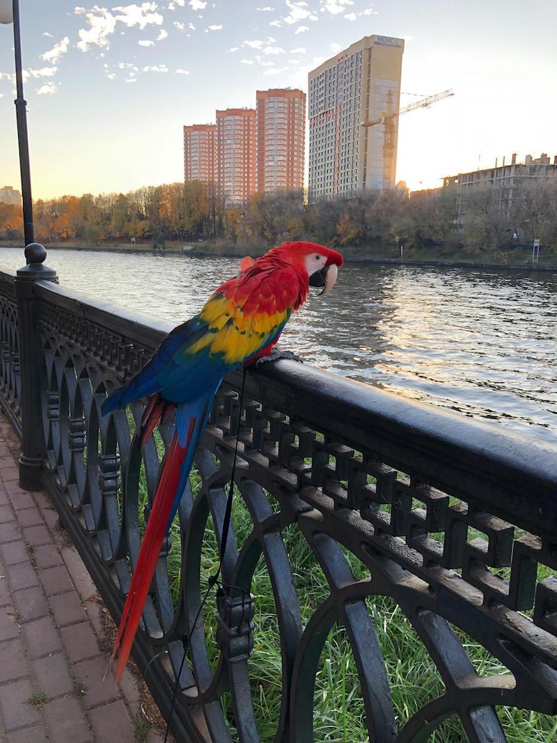 отзывы о лечении птиц. Долгопрудный. Москва.