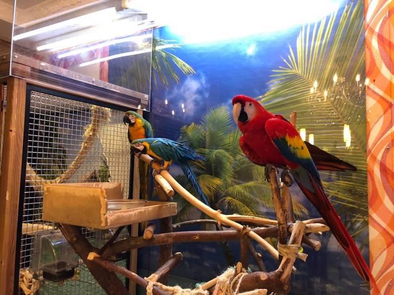 попугай ара отзыв о лечении птиц ветеринарным врачом птичьим доктором Козлитиным