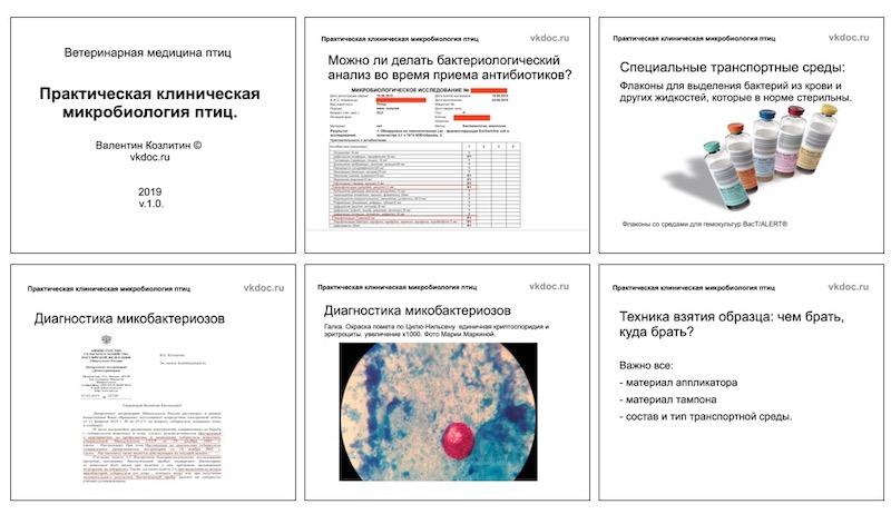 вебинар для ветеринарных врачей орнитологов практическая клиническая микробиология птиц