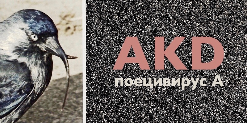 Поецивирусная инфекция птиц. Avian keratin disorder (AKD).