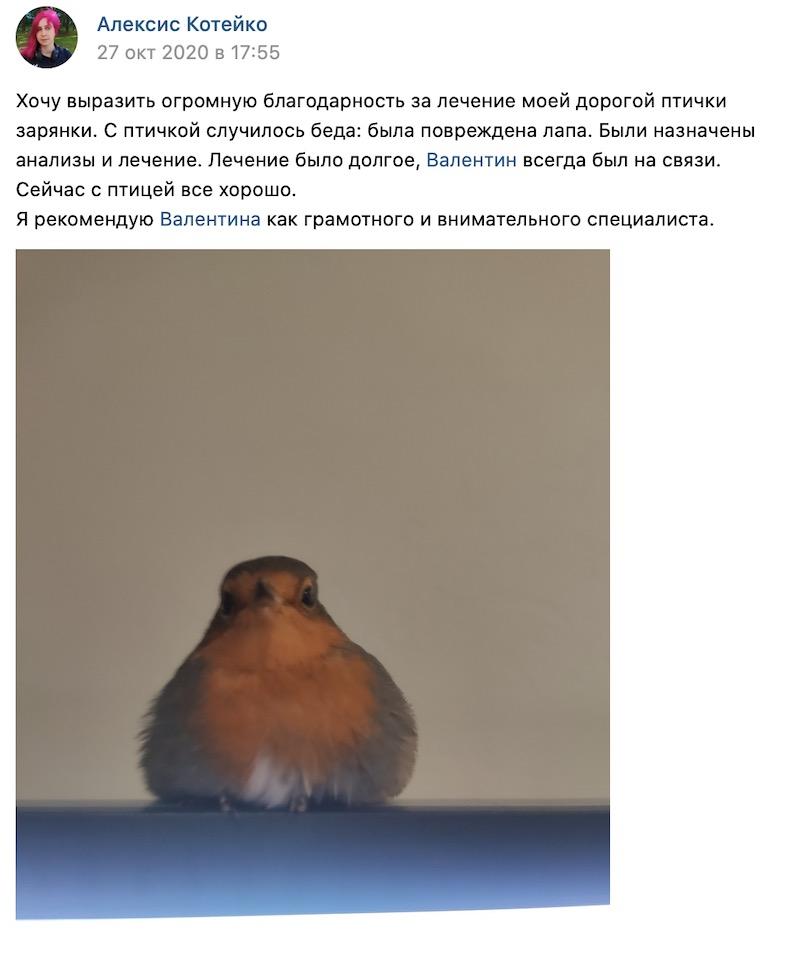 отзывы о лечении птиц онлайн, Санкт-Петербург. Зарянка.