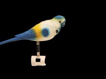 попугая трется, половое поведение волнистых попугаев,