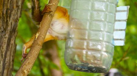 кормушки для птиц, опасность, вред, как правильно подкармливать птиц